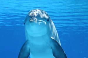 animal-fun-facts-dolphins