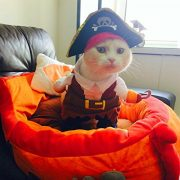 IdepetTM-New-Funny-Pet-Clothes-Caribbean-Pirate-Dog-Cat-Costume-Suit-Corsair-Dressing-up-Party-Apparel-Clothing-for-Cat-Dog-Plus-Hat-M-0-1