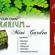 TerrariumFairy-Garden-Kit-with-3-Plants-Create-Your-Own-Living-Terrarium-0-0