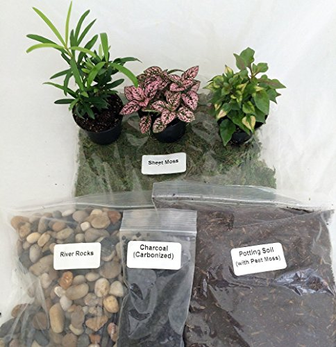 Terrarium Fairy Garden Kit With 3 Plants Create Your Own Living